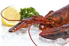 Lobster closeup Stock Photography