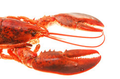 Lobster closeup Royalty Free Stock Image