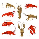 Lobster collection on white background. Crustacean concept. Lobster collection on white background. Fresh crayfish for restaurant. Crustacean concept. Vector vector illustration
