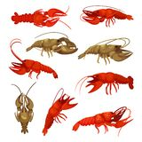 Lobster collection on white background. Crustacean concept. Lobster collection on white background. Fresh crayfish for restaurant. Crustacean concept. Vector royalty free illustration