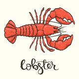 Lobster. Colorfull hand drawn illustration of the lobster Stock Image