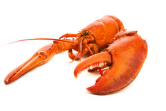 Lobster cooked Royalty Free Stock Image