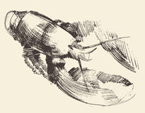 Lobster Crayfish Engraved Illustration Sketch Stock Photos