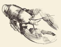 Lobster Crayfish Engraved Illustration Sketch royalty free illustration