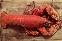 Lobster on a cutting board royalty free stock photography