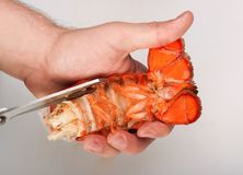 Lobster, cutting of tail Stock Image