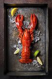 Lobster, dark grey rusty tray served on ice with lemon and live, top view, vintage style royalty free stock images