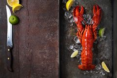Lobster, dark grey rusty tray served on ice with lemon and live, top view, vintage style royalty free stock photography