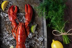Lobster, dark grey rusty tray served on ice with lemon and live, top view, vintage style royalty free stock photos