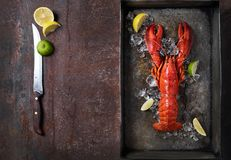 Lobster, dark grey rusty tray served on ice with lemon and live, top view, vintage style stock photo