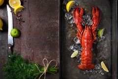 Lobster, dark grey rusty tray served on ice with lemon and live, top view, vintage style royalty free stock photo