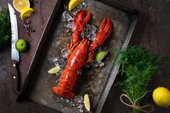 Lobster, dark grey rusty tray served on ice with lemon and live, top view, vintage style. Lobster in a dark grey rusty tray served on ice with lemon and live royalty free stock photos