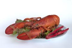 Lobster dinner. On bed of salad Stock Photos