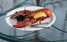 Lobster dinner. Whole cooked lobster with melted butter and lemon wedge Stock Images