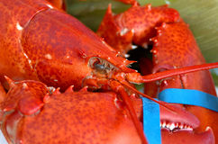 Lobster dinner stock images