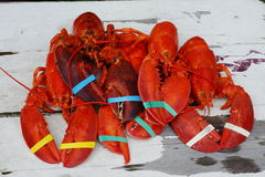 Lobster. Dinner in Connecticut stock image