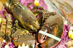 Lobster dinner Royalty Free Stock Image