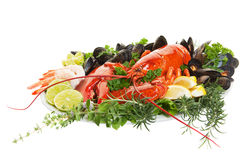 Lobster dish. Fresh seafood dish with lobster on a white background stock image