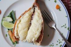 Lobster dish fish Stock Photos