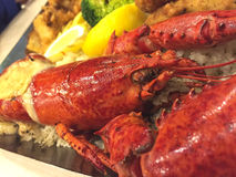Lobster on dish Stock Images
