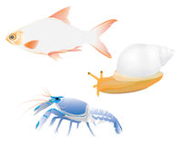 Lobster  fish smail Stock Photo