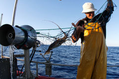 Lobster Fisherman Stock Photography