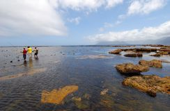Lobster fishermen. Catching crayfish off the Kommetjie coast, Cape Town Royalty Free Stock Images
