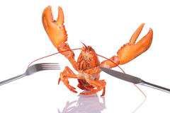 Lobster with fork and knife. Lobster fighting off fork and knife royalty free stock images