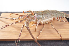 Lobster. Fresh raw lobsters on the wooden plate in white background Stock Photos