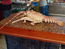 Lobster fresh seafood shellfish food in a restaurant. Ready to be cooked and served Royalty Free Stock Photo