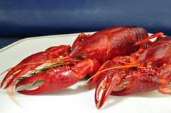 Lobster in a gourmet restaurant Stock Image