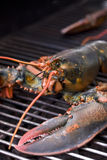 Lobster on the grill Royalty Free Stock Image