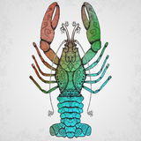 Lobster. Hand drawn isolated illustration. Royalty Free Stock Photo