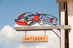 Lobster hatchery Stock Photo