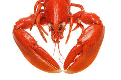 Lobster head and claws Stock Photos