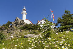 Lobster Head Cove Light and Daisies Royalty Free Stock Photo