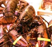 Lobster Homarus gammarus Nephropidae sea food fresh. Lobster Homarus gammarus Nephropidae mediterranean sea food fresh Stock Image