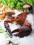 Lobster on ice Royalty Free Stock Photography