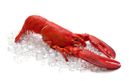 Lobster on Ice Stock Image