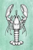 Lobster ink sketch on old paper. Stock Photography