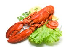 Lobster isolated seafood delicious white plate with lemon coriander and salad lettuce / Close up of steamed lobster food stock photography