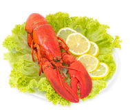Lobster isolated on white Stock Images