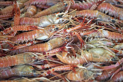 Lobster and langoustine exposed in the fish market Royalty Free Stock Image