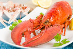 Lobster and Langoustines Stock Photos