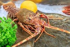 Lobster on a leaf of lettuce Stock Images