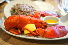 Lobster with lemon and brown rice Stock Images