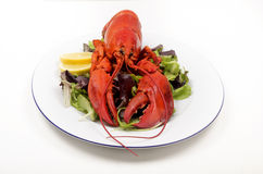 Lobster with lemon and salad on a plate Royalty Free Stock Image