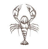 Lobster linear silhouette on a white background Royalty Free Stock Photography