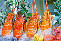 Lobster: marine crustaceans of the Mediterranean sea. Royalty Free Stock Image