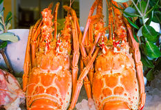 Lobster: marine crustaceans of the Mediterranean sea. Royalty Free Stock Images